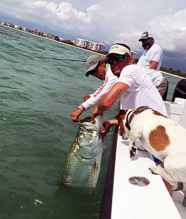 Bringing in a Large Fish | Fishing and Eco-Tour Charters in Fort Myers and Naples Florida - Pica Charters, LLC