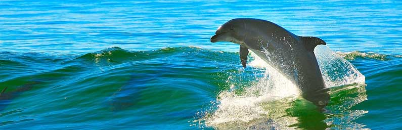 Dolphin Tours | Fishing and Eco-Tour Charters in Fort Myers and Naples Florida - Pica Charters, LLC
